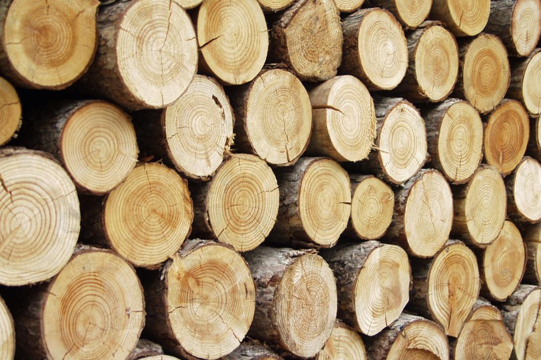 Holzmassivbauweise